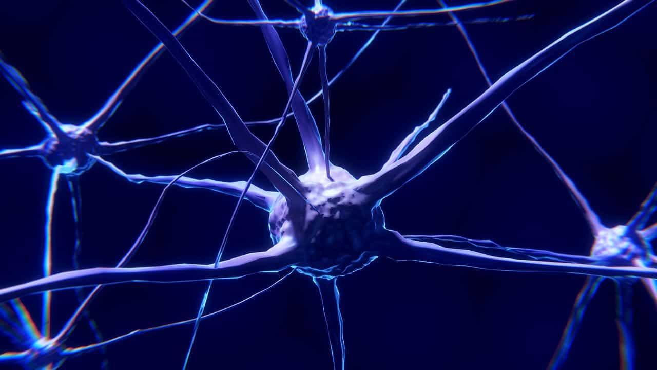 Gehirn Neuorlogie Nerven