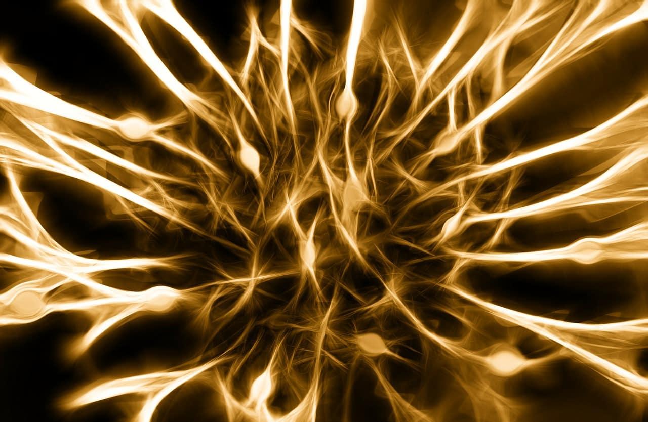 Fernstudium Wirtschaftspsychologie - Nervensystem