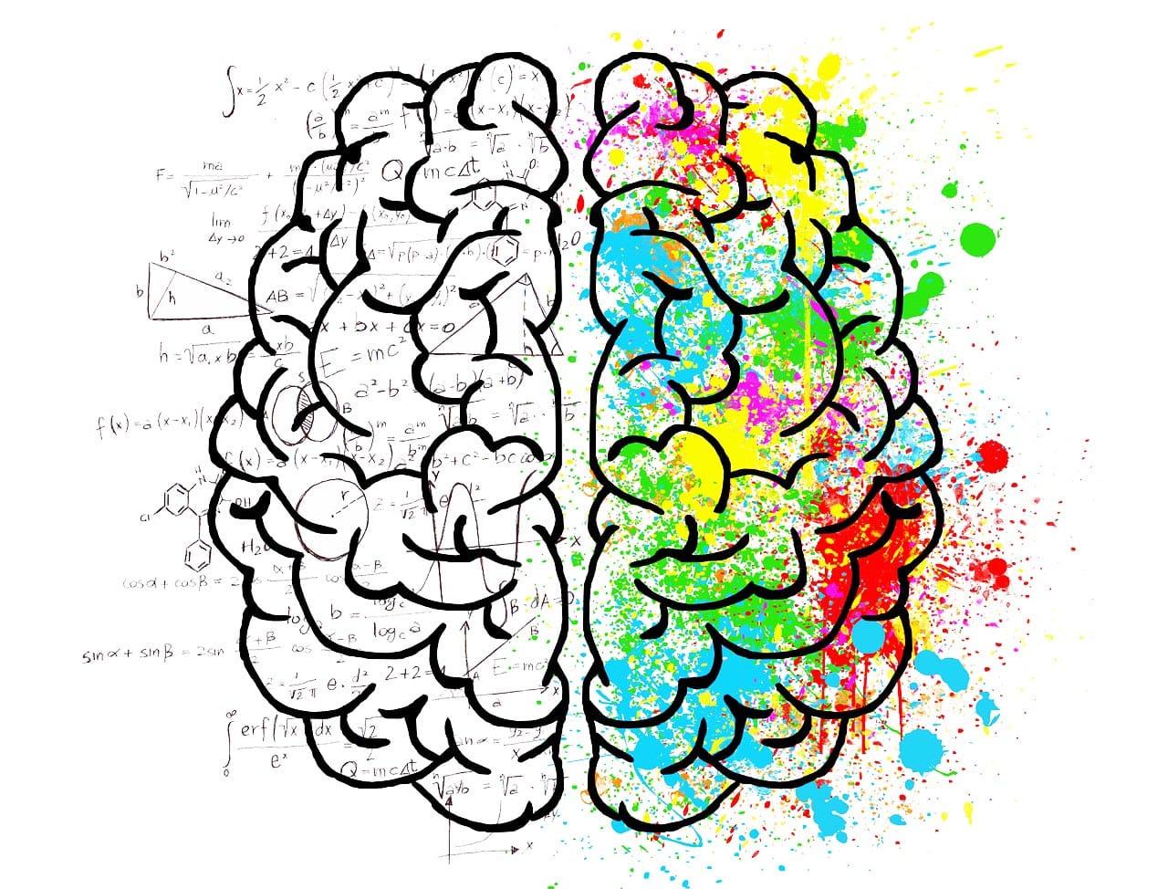 Fernstudium Wirtschaftspsychologie Aufbau Gehirn wissenschaftlich